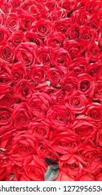Valentine's day concept. Red Rose flowers background.