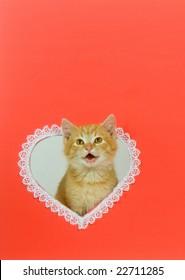 Kitten Valentine Images Stock Photos Vectors Shutterstock