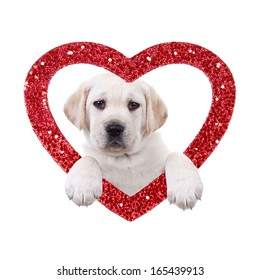 Valentine's Day Labrador puppy dog and red glitter heart isolated on white
