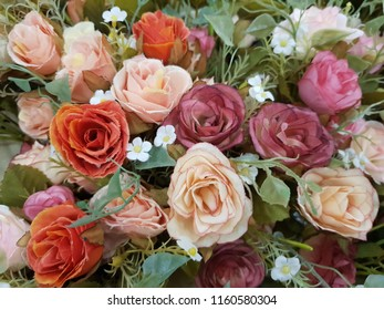 Valentines, Day of Love 2019 and beautiful roses:Use for website banner backdrop, montage