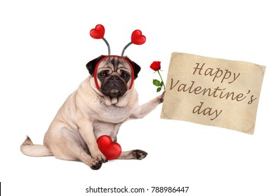 Valentine's day pug dog sitting down, holding up paper scroll, wearing diadem with hearts, isolated on white background
