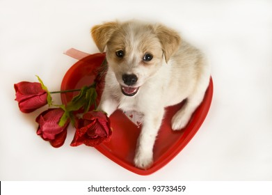 Valentines Day Puppy and heart and roses