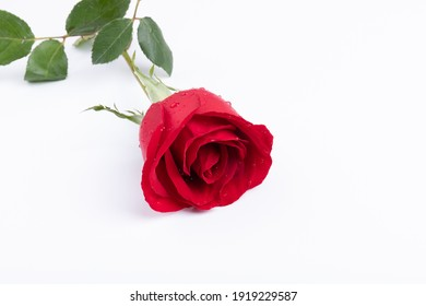 Valentine's day, red rose flowers