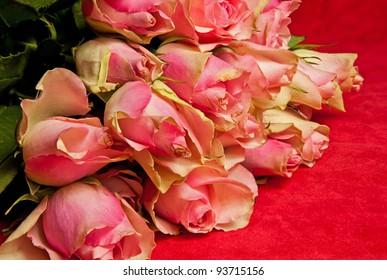 Valentine's day roses closeup