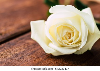 Valentines day white rose on wooden background.
