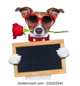 valentines dog with a red rose in mouth , isolated on white background,holding a blackboard , banner or placard
