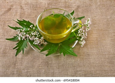 Valerian herb flower sprigs with a cup of herbal tea