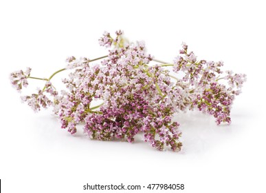 Valerian herb flower sprigs on a white background