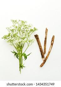 Valerian herb on white wooden background. Shallow dof.