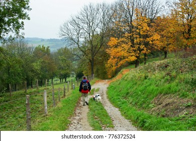 Valkenburg, Limburg, Netherlands - October 27, 2007: A man walks a black and white dog (Friesian Staby) on a dirt track in the Geren valley (Gerendal) in Limburg, Netherlands, in autumn.