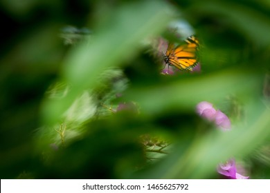 Valle de Bravo, Mexico State / Mexico - November 4, 2018 : Hidden Monarca Butterfly and bugambilia colors in the background