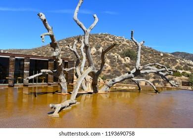 Valle de Guadalupe - Landscape