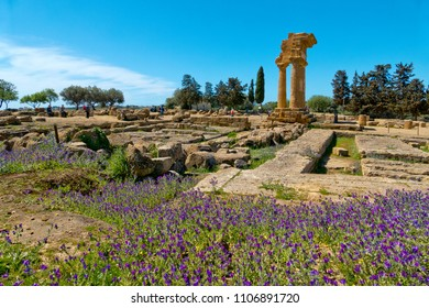 Valle dei Templi (Valley of the Temples), flowers blooming near the Temple ofCastor and Pollux in Agrigento, Sicily