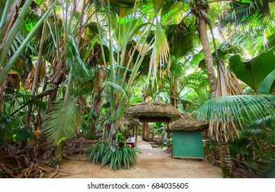 The Vallee De Mai palm forest ( May Valley), island of Praslin, Seychelles.