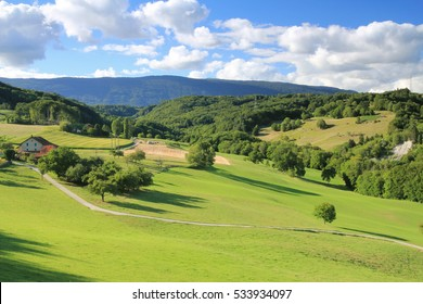 The valley of the Aubonne arboretum in summer, Canton of Vaud, Western Switzerland