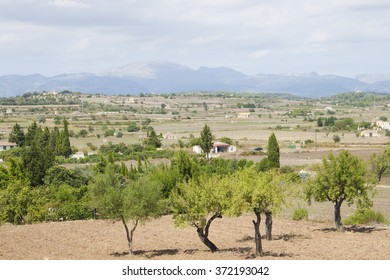 Valley in the central part of Majorca island, Spain