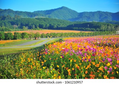 Valley of Colorful Flowers