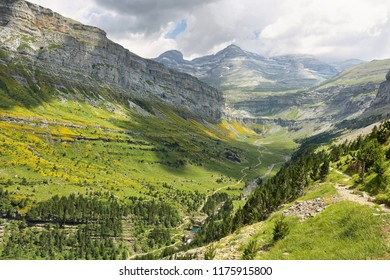 Valley covered with yellow flowers in Ordesa national park in Huesca, Spain. Horsetail waterfall and Monte Perdido peak are at background.