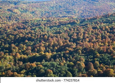 valley covered with yellow forest in the fall