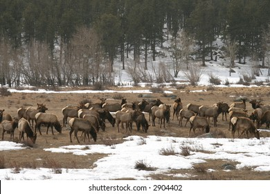 Valley with elk