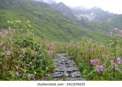 Valley of flower in utrakhand is a valley full of flowera