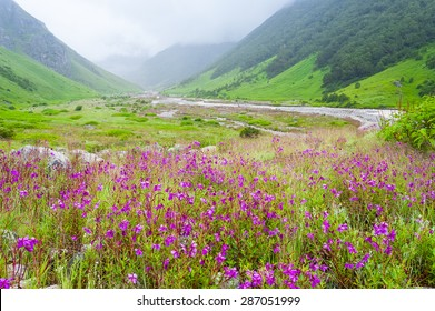 valley of flowers , india
