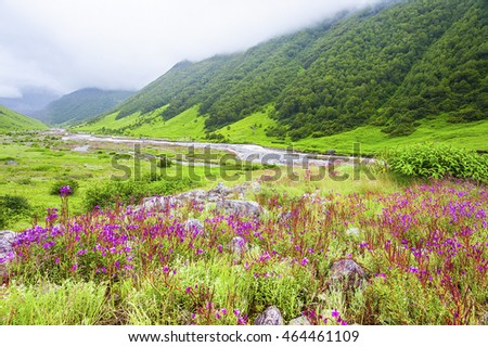 Valley of Flowers the scenery is breathtaking, uttarakhand india
