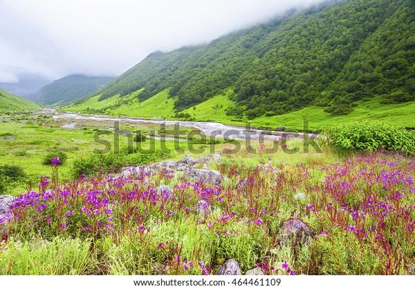 Valley of Flowers the scenery is breathtaking, uttarakhand india