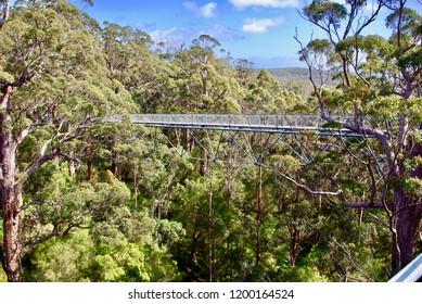 In the Valley of the Giants treetop walk Denmark Western Australia
