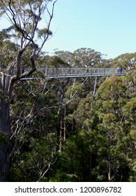 Valley of the Giants Treetop Walk Denmark Western Australia