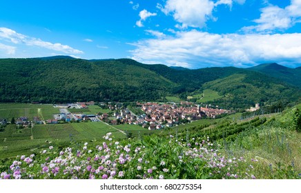 Valley of Kientzheim in Alsace in spring