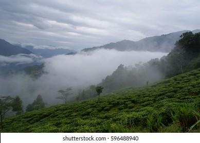 Valley of Sikkim