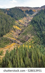 Valley stretching through the mountains surrounded by forest and fir trees.
