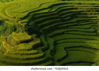 The valley of terraced rice fields , Mu Cang Chai, Yen Bai, Vietnam