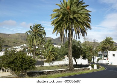 Haría in the Valley of the thousand palms, Lanzarote, Canary Islands, Spain, Europe