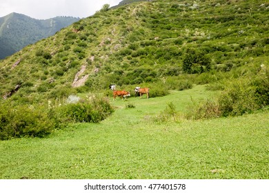 The Valley of Tirah Khyber Agency Pakistan