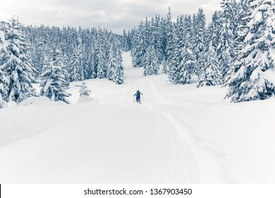 Valmalenco (IT) - Snowshoeing in fresh snow in the pine forest