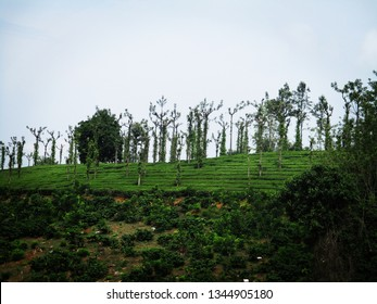 Valparai Tea Estate , Coimbatore