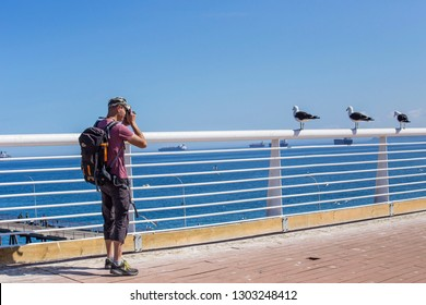 VALPARAISO, CHILE - February 2019: Man photographer taking photo of seagulls sitting in a row on sunny day in Valparaiso, Chile