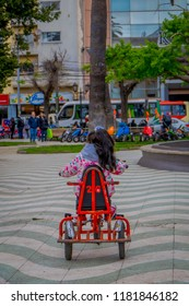VALPARAISO, CHILE - SEPTEMBER, 15, 2018: Outdoor view of unidentified little girl riding his tricyle in a square of a park located in dowtown on Valparaiso