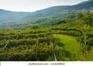 Valpolicella Vineyards in Verona, Veneto, Italy