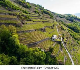Valtellina (IT) - Vineyards in the Chiuro area - Spring aerial view
