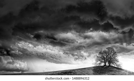 Van Gogh's premonition, Creative landscapes with birds flying, tribute to Ansel Adams, black and white artistic photography of storm clouds, tree, fear,
