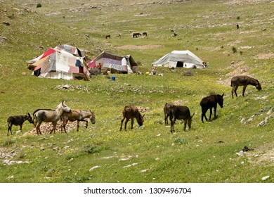 VAN, TURKEY — MAY 5, 2011. A young boy stands beside tents at a semi-nomadic shepherds' camp while donkeys graze amid spring wildflowers on a rocky, grass-covered hillside in Eastern Anatolia.