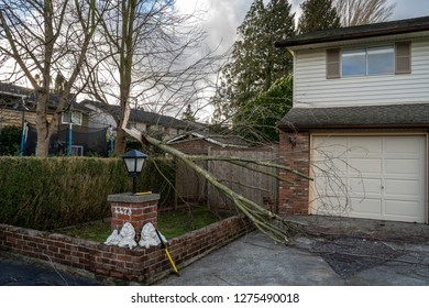 Vancouver, BC / Canada - December 29th 2018 : Broken Trees after a Wind Storm
