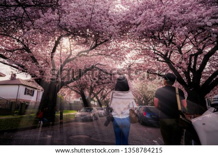 Vancouver BC Canada,April 2,2019,tourists with street cherry blossoms backgorunds