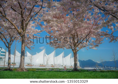 Vancouver BC Canada,March 30,2019.Cherry blossoms with Canada place backgrounds.Fairmont Waterfront, Vancouver