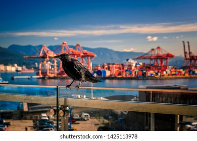 Vancouver, British Columbia / Canada - September 24th 2018: Raven sitting on edge, view of Vamcouver Harbour from Granville Plaza, Vancouver, British Columbia, Canada, North America