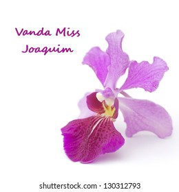 Vanda Miss Joaquim, Singapore's National Flower; unsharpened file