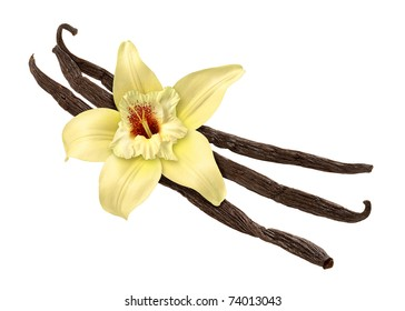 Vanilla Bean and Flower isolated with clipping path